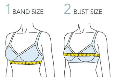 measure bra bust and bust size